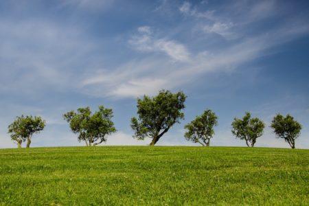 エシカルを理解して、環境に優しいエシカルを生活に取り入れよう