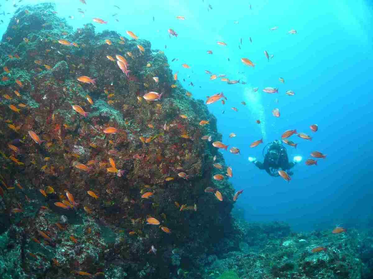 伊豆大島 ダイビング