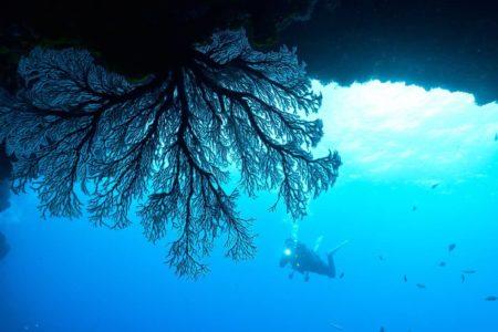八丈島で楽しむ亜熱帯ダイビング!空と海が溶けあう「八丈ブルー」に染まる
