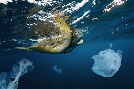 深海1万メートルに漂うレジ袋!現役ダイバーが伝えたい海洋ごみ問題