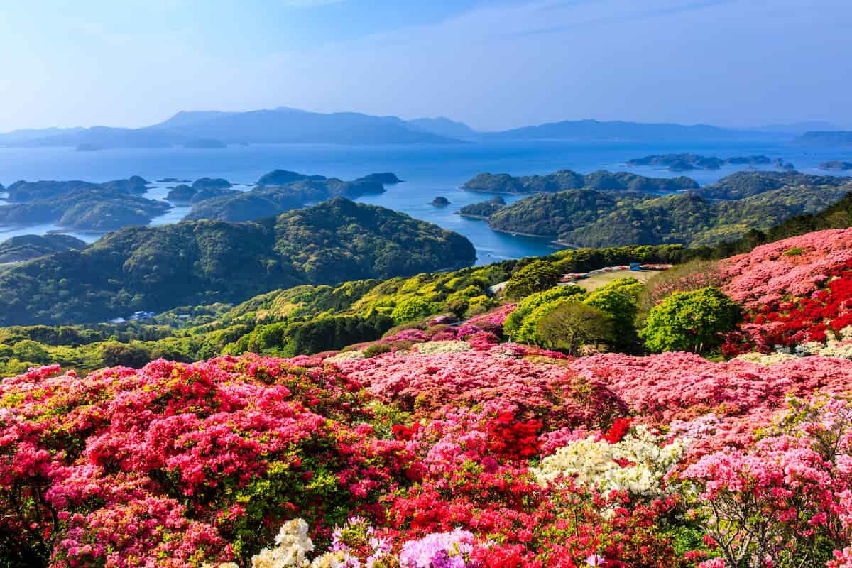登山 お花見