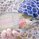 鹿児島でニジマス釣り!ニジマスが狙える鹿児島の管理釣り場・釣堀まとめ