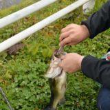 夏の川バス釣り爆釣パターンを伝授!おすすめルアーとハマるエリアの解説付き