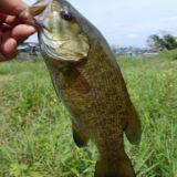 スモールマウスバス釣り関東のおすすめ3大フィールド!夏の釣り方・魚の探し方