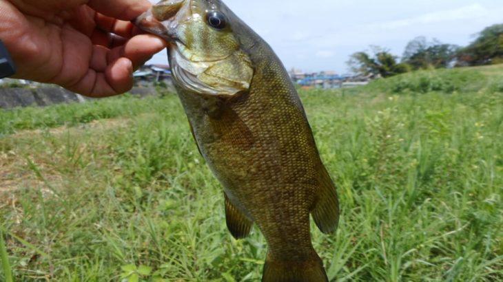 スモールマウスバス釣り 関東