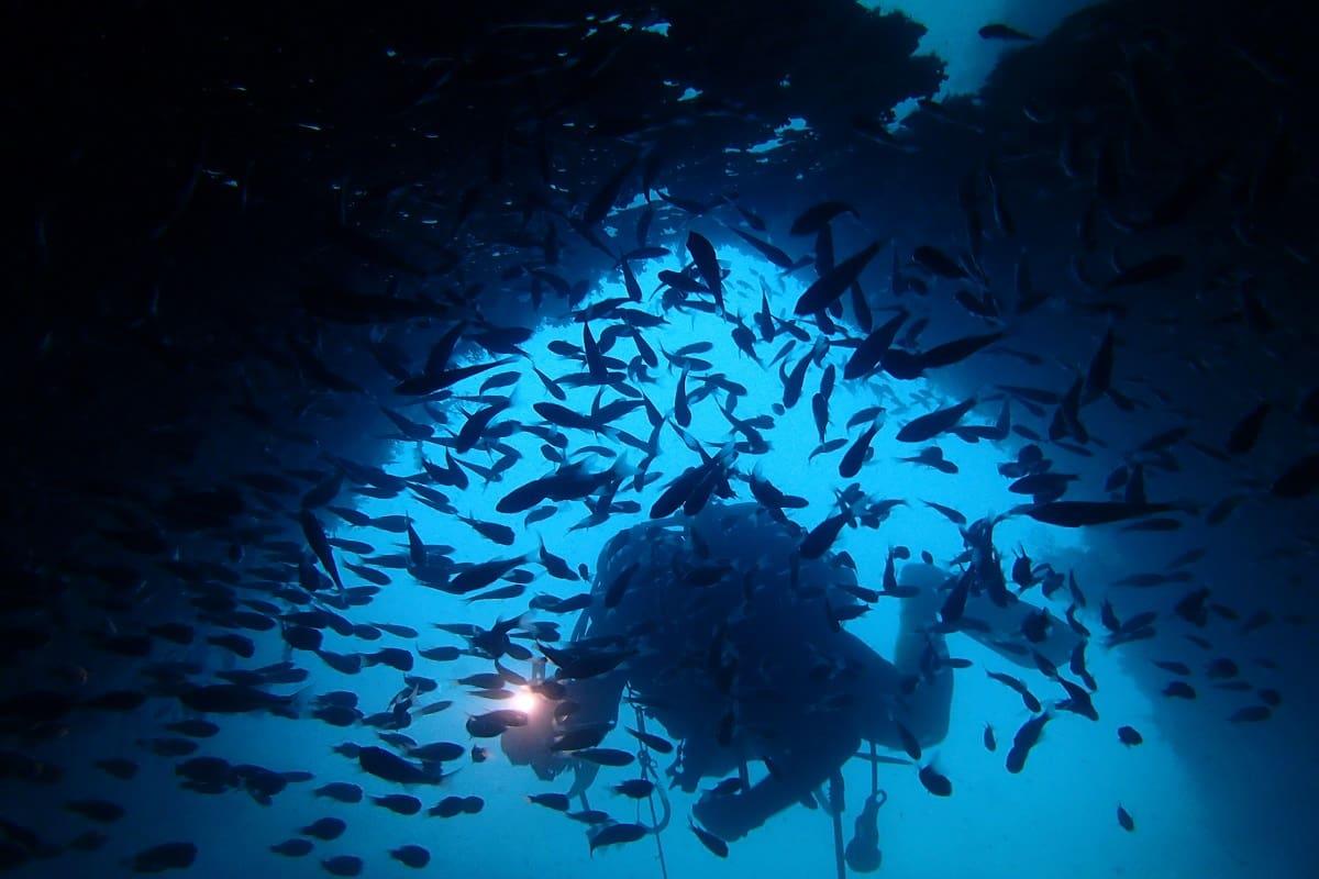 ダイビングスポット 紀伊半島