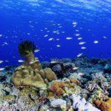 お家で楽しむ海の本!ダイビングインストラクターが海の写真集やエッセイをご紹介