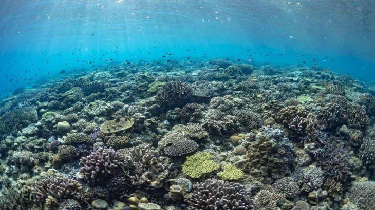 GoToトラベルでダイビングに行こう!今もサンゴが隆起している喜界島