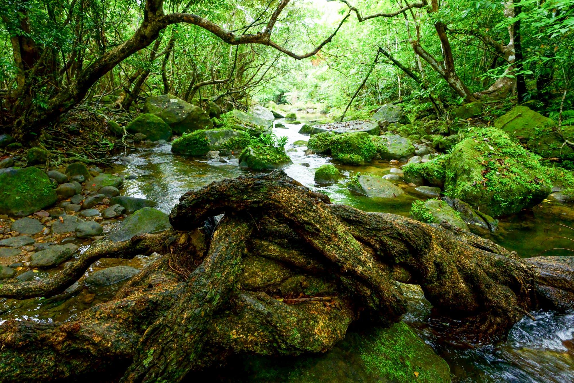 ユツン川の森