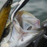 【東京江東区限定】クロダイや根魚も狙えるおすすめの海釣りポイント5選