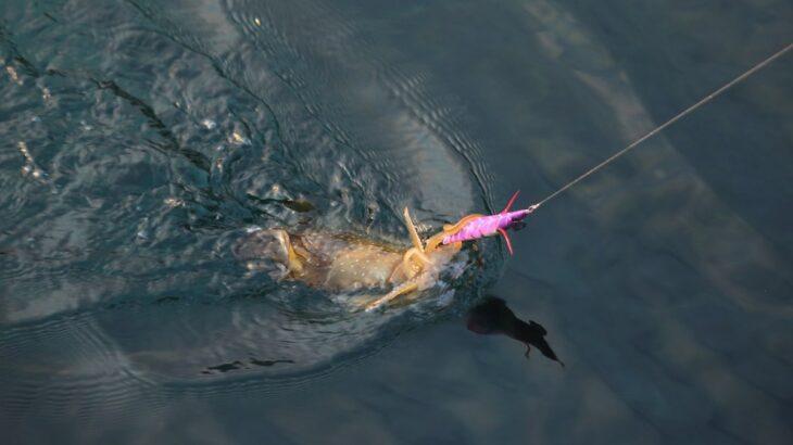 冬でもアオリイカを釣りたい!初心者でも釣れる冬エギングを解説