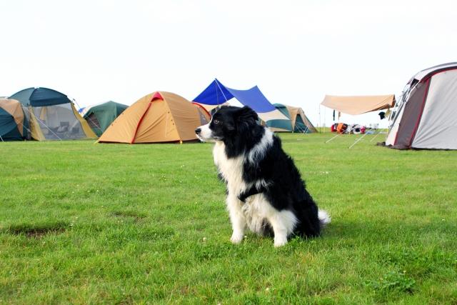 冬キャンプ 犬