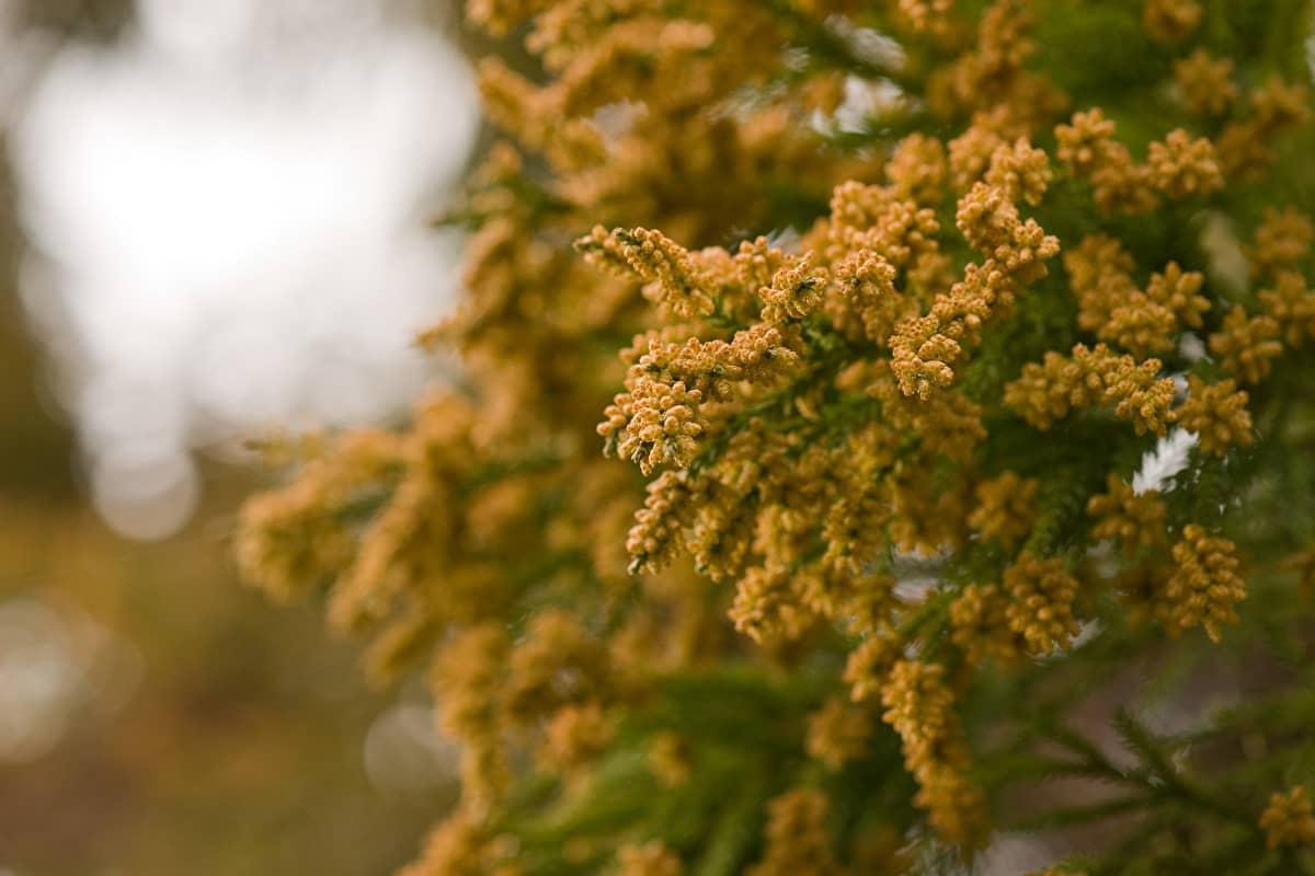 キャンプ 花粉症対策