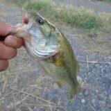 春の最強メソッド!バス釣り初心者におすすめの【ヘビーウエイトネコリグ】をご紹介します