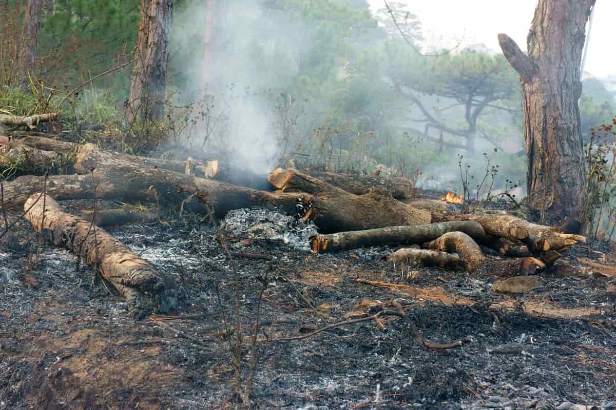 環境問題 オーストラリア