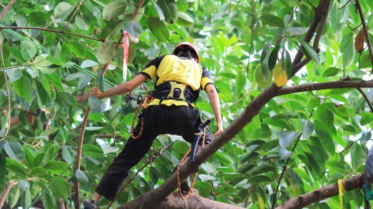 情熱大陸で注目!日本に数名しかいない樹上で活躍するツリーケアの専門家アーボリストとは?