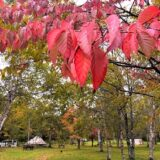 【北海道・道東編】北海道の秋キャンプを満喫しよう!おすすめキャンプ場の紹介