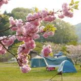 お花見キャンプ!さくらが自慢のおすすめキャンプ場〜関西編