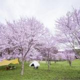 お花見キャンプしよう♪綺麗な桜を堪能できるおすすめキャンプ場〜関東編